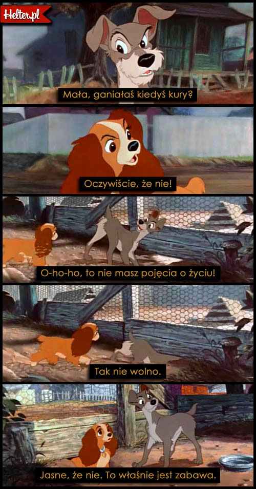 Cytaty Z Bajki Zakochany Kundel Disney Helterpl
